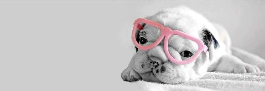 Ảnh cover chú cún đeo mắt kính