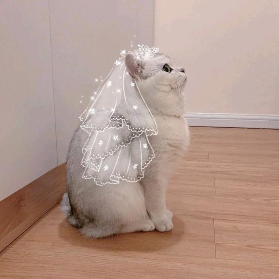 Hình đại diện cô dâu mèo siêu đáng yêu