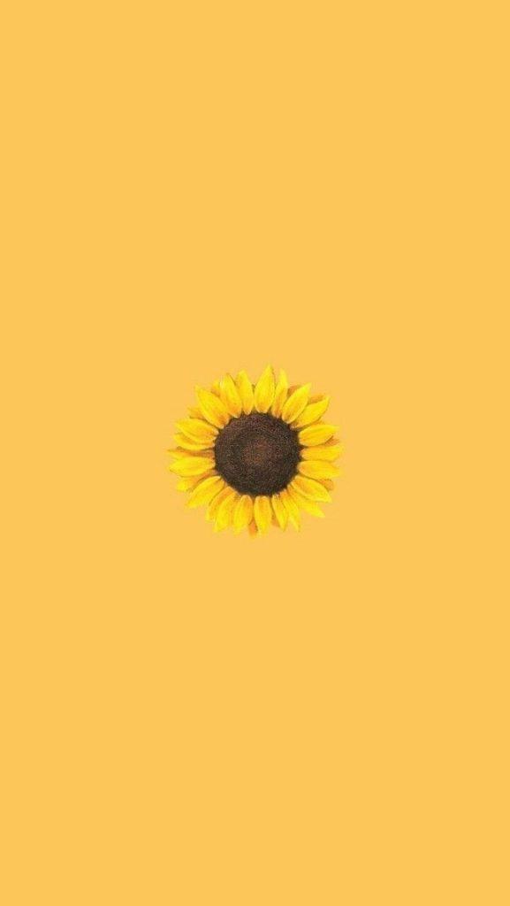 Nền hoa hướng dương độc đáo