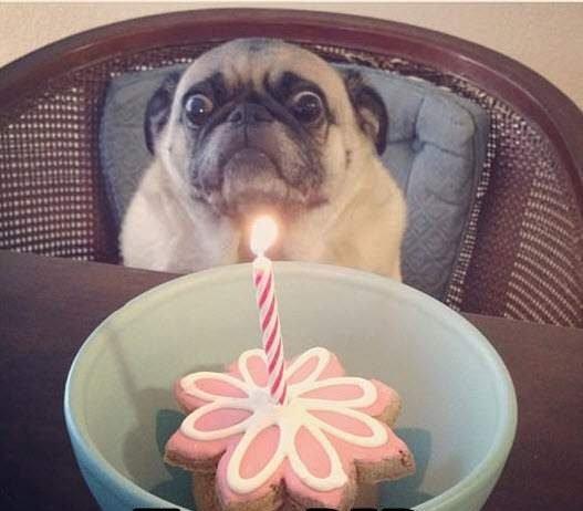 Ảnh chúc mừng sinh nhật bá đạo