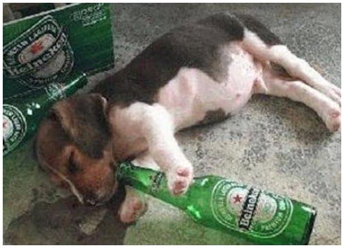 Ảnh hài hước say rượu không thể nhịn nổi cười