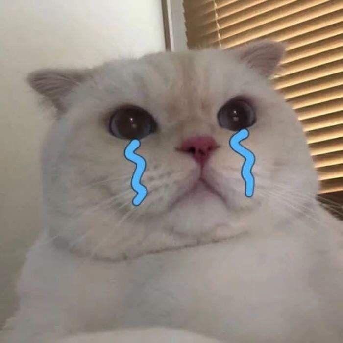 Ảnh mèo khóc siêu cute