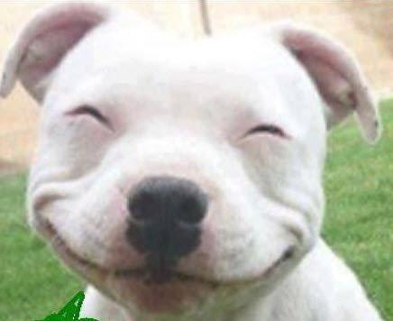 Avatar mặt cười