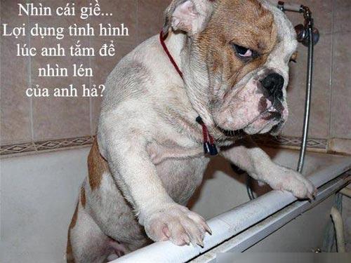 Hình chó cute chế hài