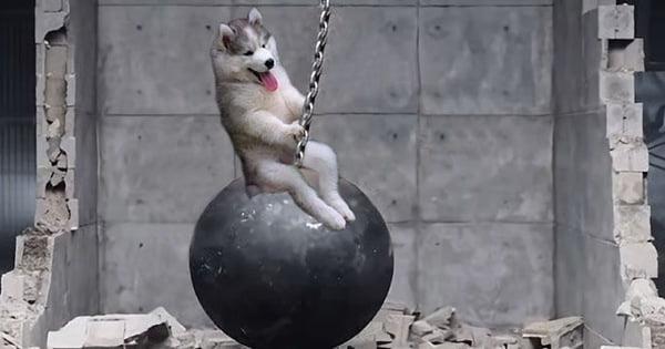Hình chế chó ngáo cực cute