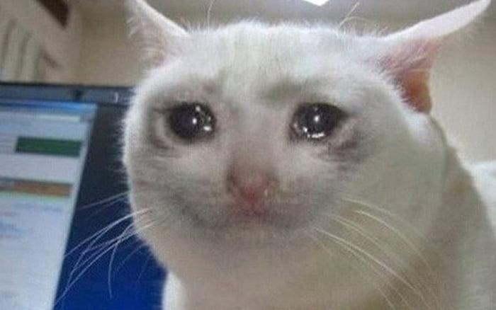 Hình chế mèo khóc