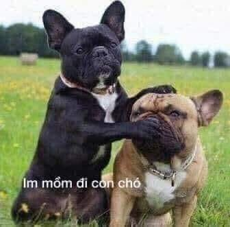 Im mồm đi con chó