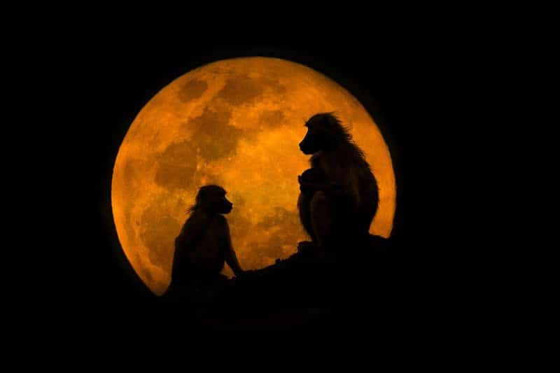 Hình chụp vầng trăng