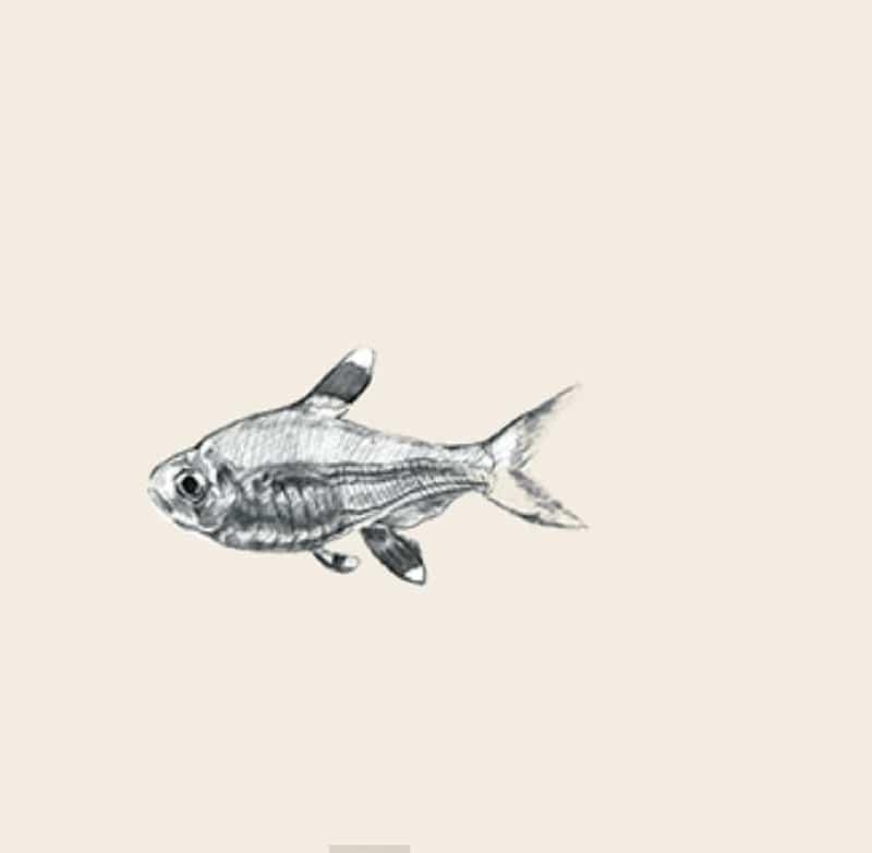 Hình con cá 4D