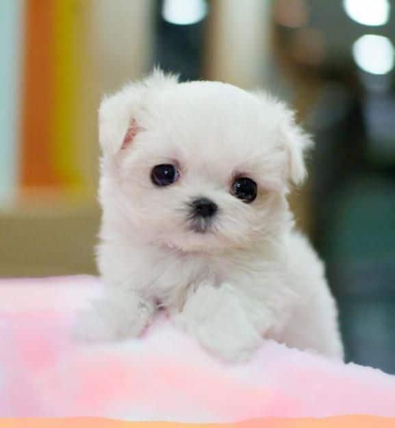 Hình con chó đáng yêu