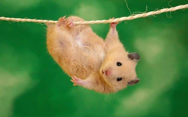 Hình con chuột dễ thương