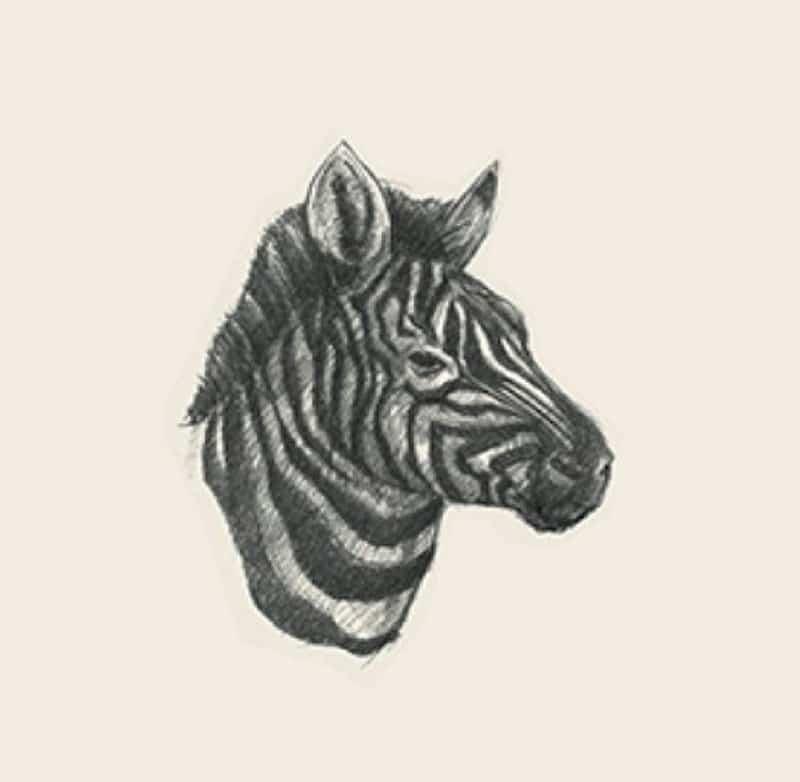 Hình con ngựa 4D