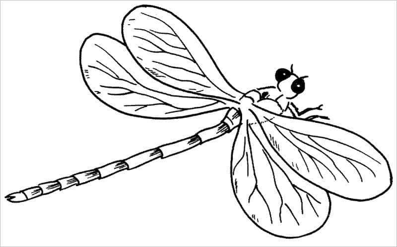 Hình con vật tô màu chuồn chuồn