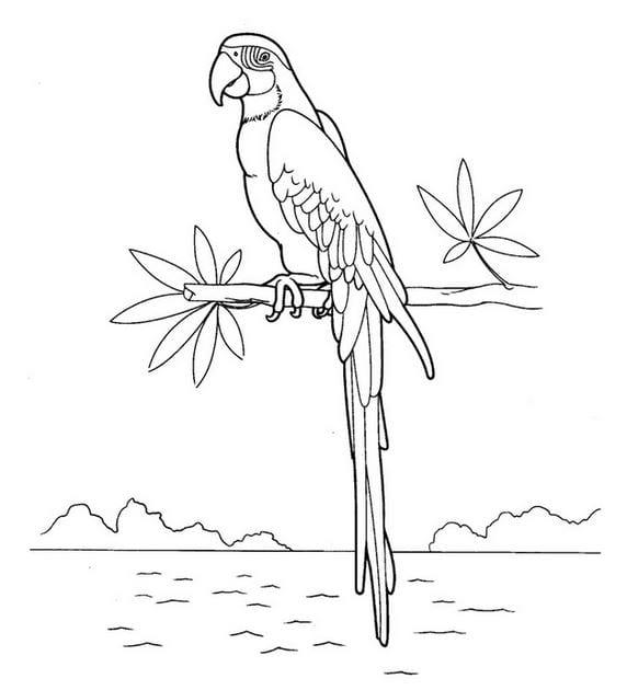 Hình tô màu con chim