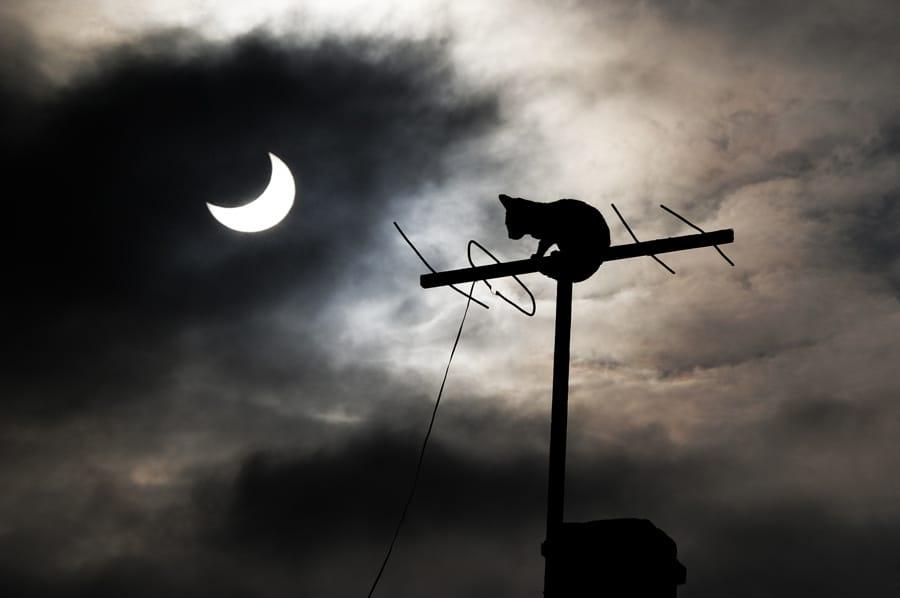Mặt trăng và chú mèo
