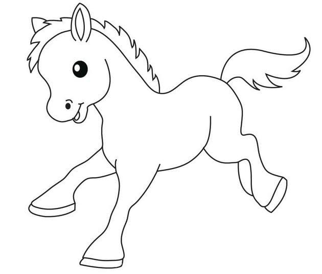 Một chú ngựa đáng yêu