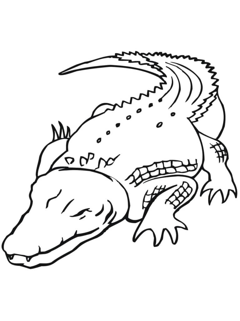 Tổng hợp các bức hình tô màu cá sấu cho bé tập tô