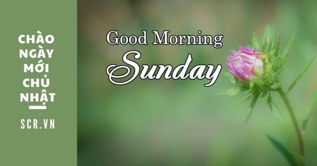 chào ngày mới chủ nhật