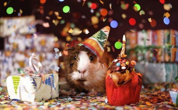 Ảnh chú chuột chúc mừng sinh nhật đáng yêu