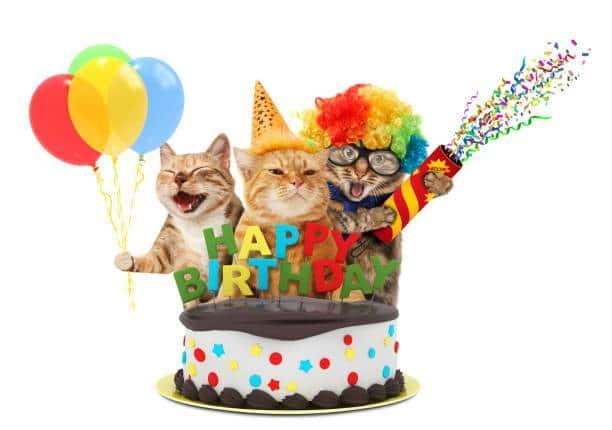Ảnh chúc mừng sinh nhật những chú mèo vui nhộn