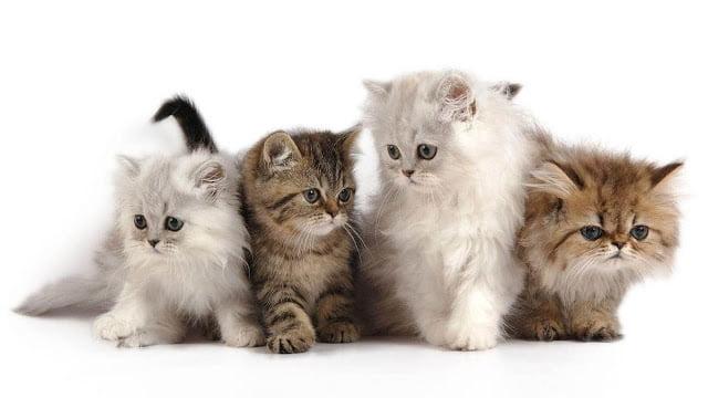 Bốn chú mèo đáng yêu