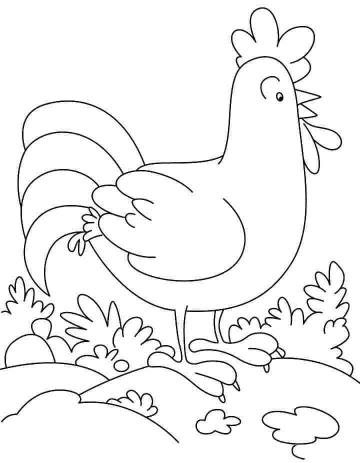 Bức hình gà trống đẹp nhất cho bé