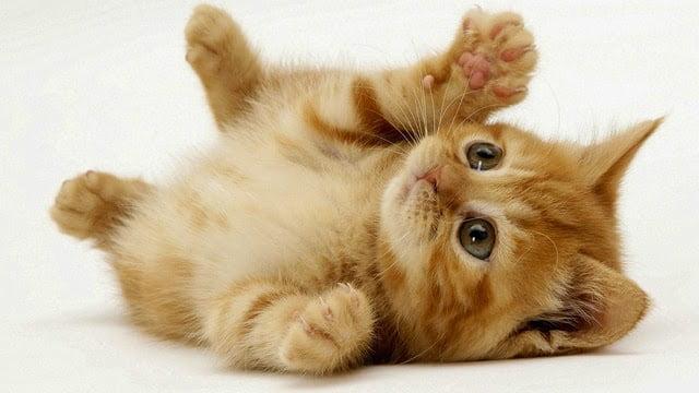 Chơi đùa cùng chú mèo