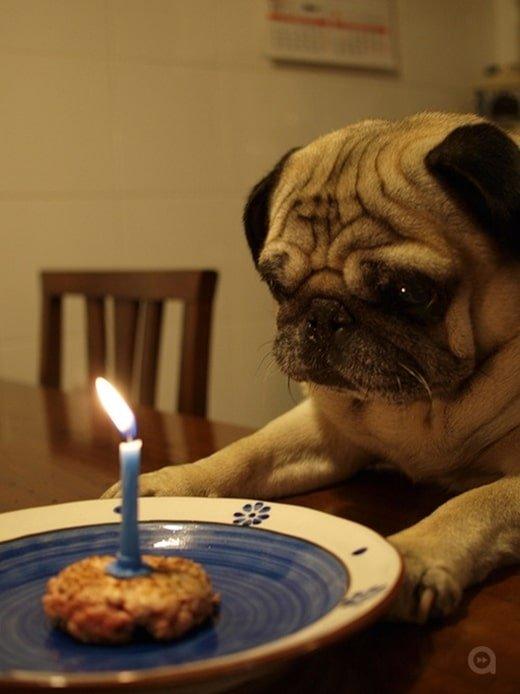 Chú chó mặt buồn khi nhìn vào chiếc bánh