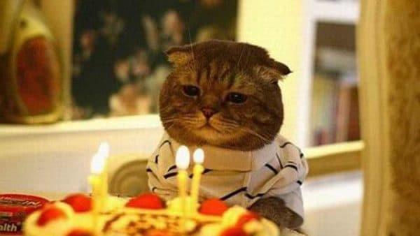 Chú mèo buồn rầu bên chiếc bánh sinh nhật