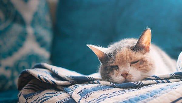 Chú mèo dễ thương với bộ ảnh full HD