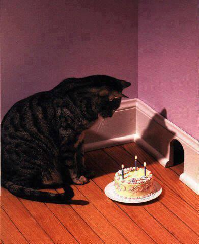 Chú mèo ngồi một mình cùng chiếc bánh kem
