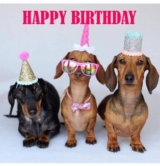 Chúc mừng sinh nhật hài hước