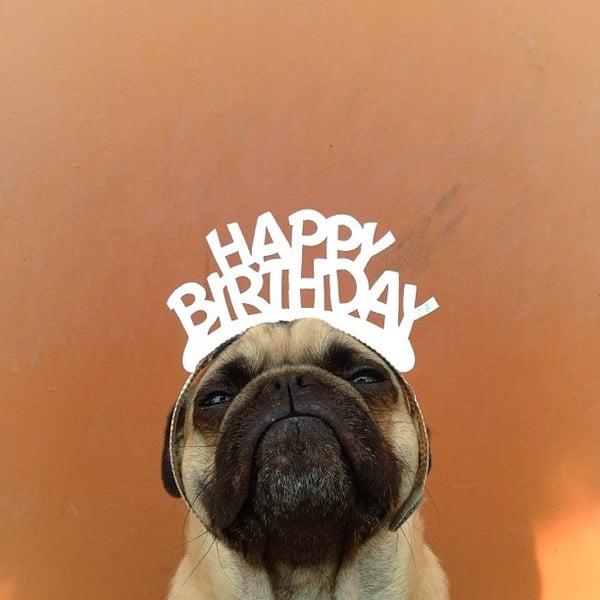 Chúc mừng sinh nhật hình chú chó hài hước