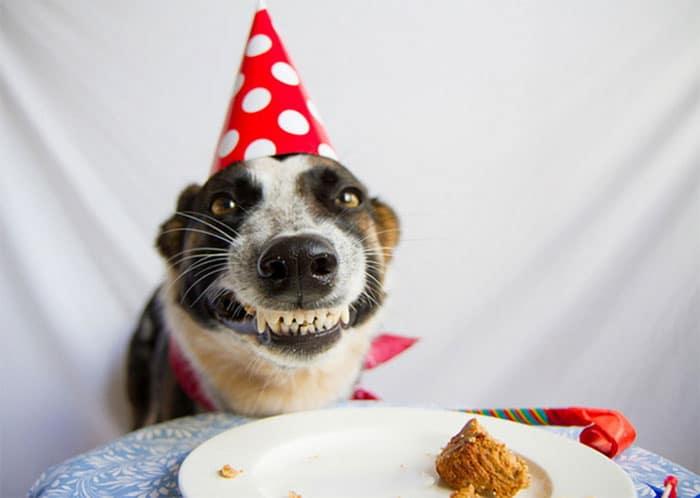 Hình ảnh chúc sinh nhật hài hước