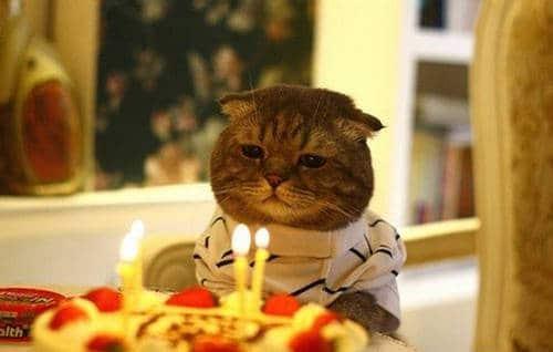 Hình ảnh sinh nhật vui vẻ và sặc mùi troll