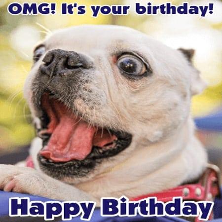 Hình ảnh vui nhộn với chú chó chúc mừng sinh nhật