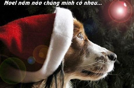 Hình chế Noel hài hước lầy lội