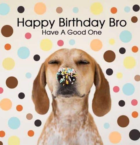 Hình chúc mừng sinh nhật không thể đáng yêu hơn