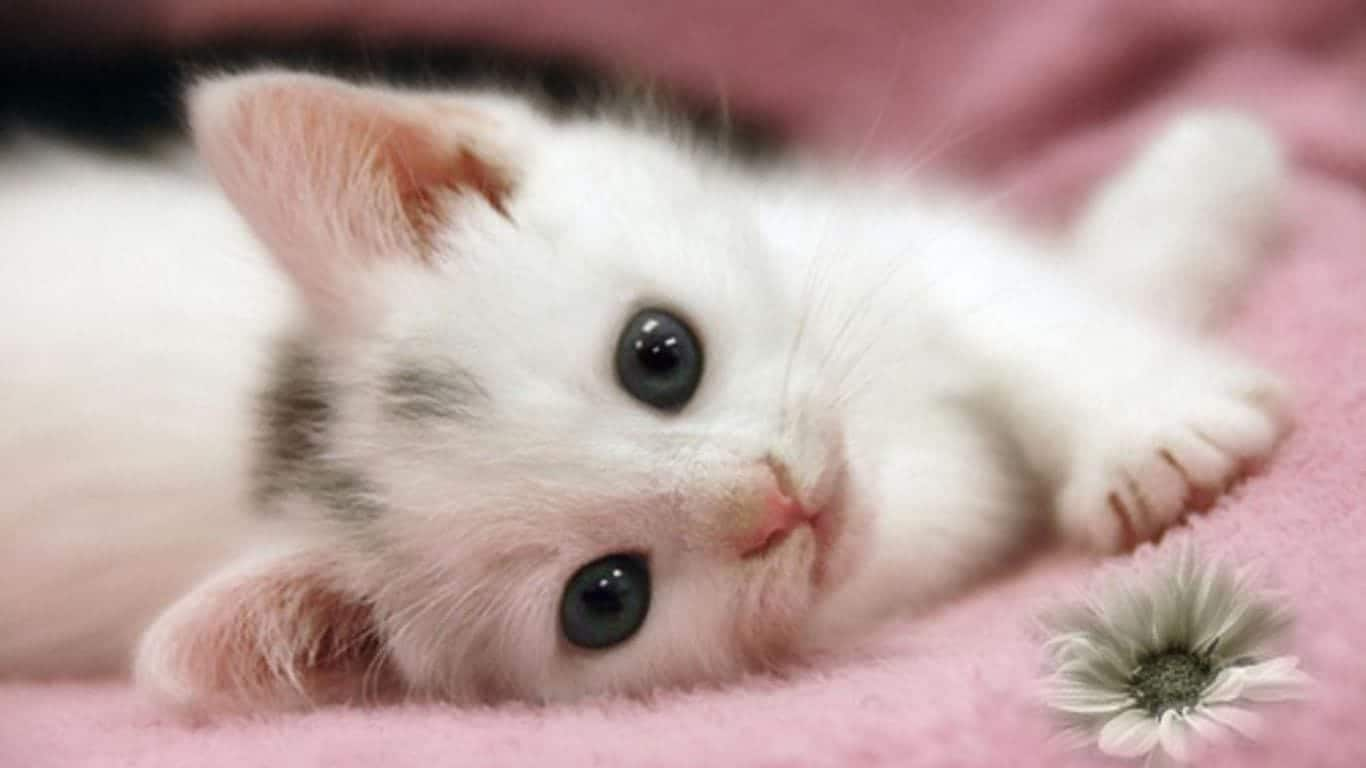 Ảnh con mèo cute đáng yêu nhất