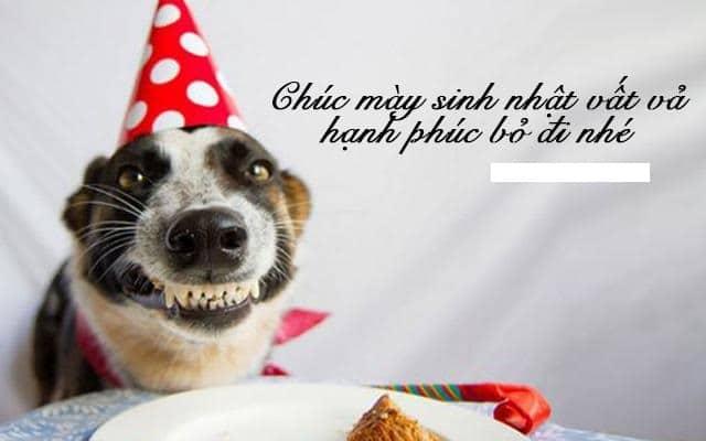 Lời chúc sinh nhật lầy lội và hài hước