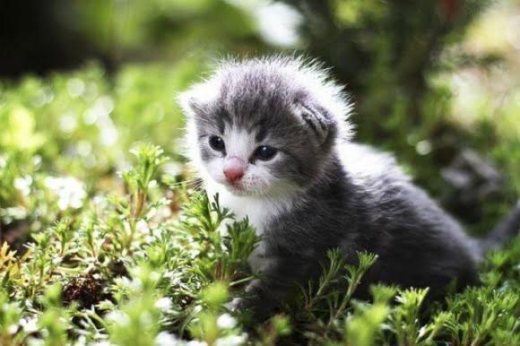 Mèo con đang nghịch phá