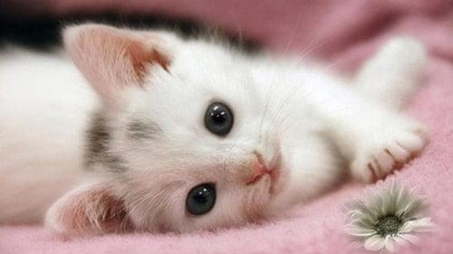 Mèo đáng yêu hết nấc