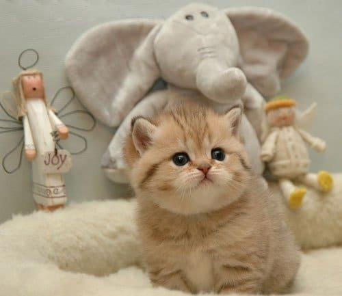 Mèo đáng yêu quá đi