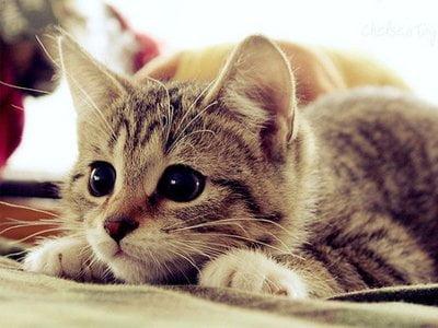 Mèo dễ thương nhất quả đất