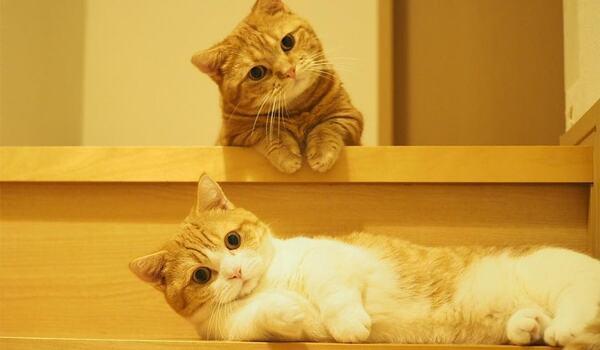 Mèo xinh xắn, đáng yêu