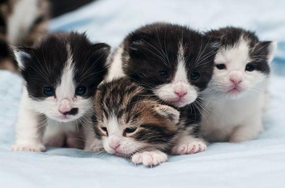 Mèo yêu thương nhau lắm