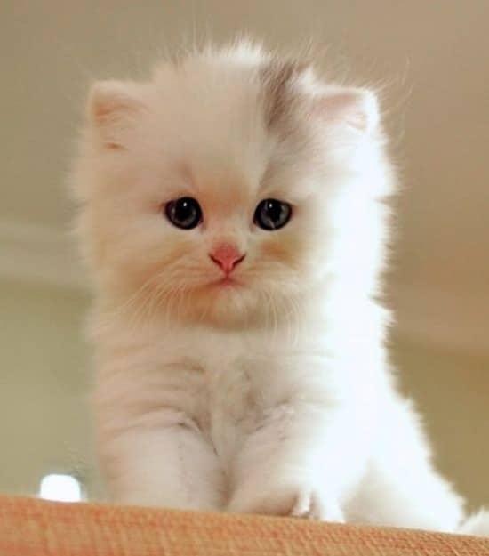 Nhìn gì vậy mèo