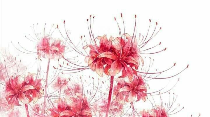 Tranh vẽ hoa bỉ ngạn cực đẹp