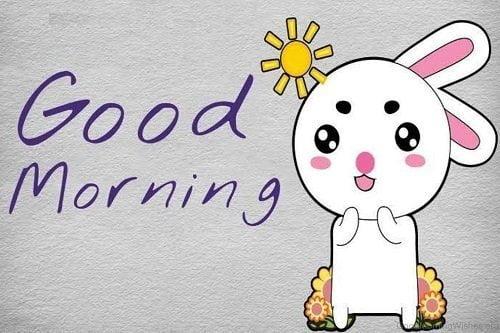 Ảnh chào buổi sáng hài hước đáng yêu