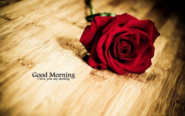 Bông hoa hồng chào buổi sáng dễ thương gửi tặng người yêu